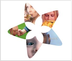 sensory-research-img-1